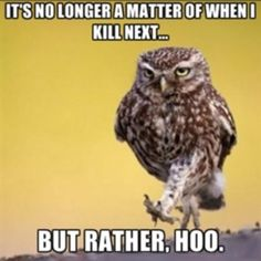 What a hoot. I think owl stay away.