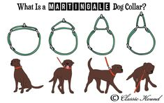 Questions Regarding Martingale or Metal Buckle Collars, Collar Sizing, Custom Orders, and Safety