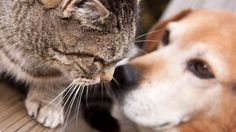 Come capire se cani e gatti non stanno bene