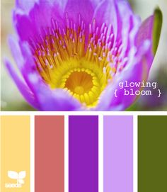 Color Palette Ideas for Website  www.design-seeds.com