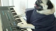 This pug who is really excited to lay down new tracks in your next jam session.   16 Dogs Who Want You To Keep Up WithThem