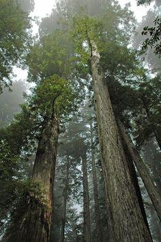 Destruimos la bosque de lluvia. Muchos animales son en peligro de extinción
