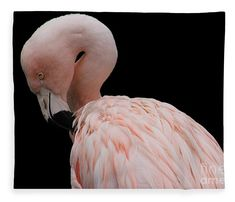 Portrait of a Flamingo Fleece Blanket x by Lkb Art And Photography. Our luxuriously soft throw blankets are available in two different sizes and feature incredible artwork on the top surface. Blankets For Sale, Soft Blankets, Canvas Art Prints, Canvas Wall Art, Color Show, Decorative Throw Pillows, Colorful Backgrounds, Duvet Covers