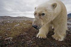 Polar Obsession | Fubiz™