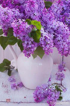 Purple Flowers Wallpaper, Lilac Flowers, My Flower, Flower Power, Beautiful Flowers, Lilac Painting, Lilac Bushes, Good Morning Flowers, Beautiful Flower Arrangements