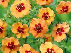 Planter des fleurs qui résistent au froid, c'est possible. Et ça ne coûte pas forcément très...