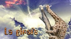 La girafe - Robert D