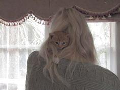 find the hidden kitty