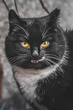 Emozionanti ritratti fotografici di gatti randagi realizzati da Gabrielius Khiterer