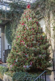 Longwood Gardens - Christmas - Exhibition Hall - Tree - 2012