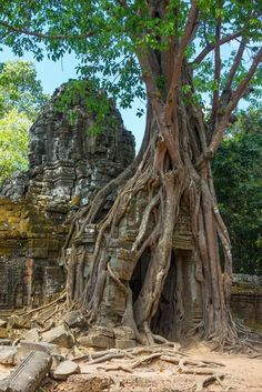 Cambodia travel: Angkor temples in Siem Reap. Quick guide including map, cost, transport and tips || Photo: Ta Som temple