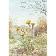 Margaret Tarrant - Coltsfoot