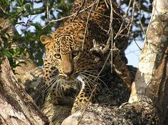 Yala National Park, Sri Lanka