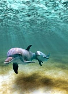 Dolphin mom and baby via www.petapeta.tumblr.com