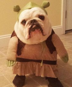 Do these people not know that this is not a Yoda costume, it's Shrek? These humans are undereducated!