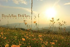 Buttercup Sunset on Max Patch Digital by DandelionDrifters on Etsy, $5.00
