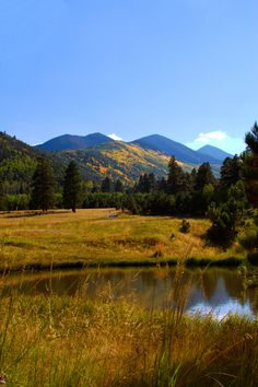 Lockett Meadow, Inner Basin, Flagstaff Arizona // Logan Brumm