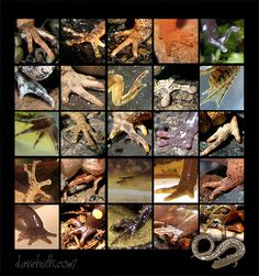 Amphibian feet