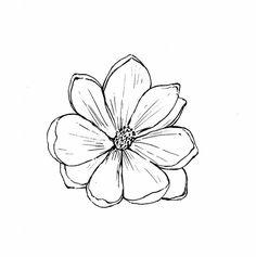 Zinnia Flower Drawing Tropical Zinnia Flower Blossom Botanical ...
