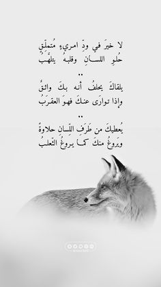 Quran Quotes, Wisdom Quotes, Life Quotes, Wall Quotes, Mixed Feelings Quotes, Mood Quotes, Poetic Words, Language Quotes, Spirit Quotes