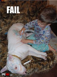 I can totally see my dogs laying there allowing my son to do this to them! Lol
