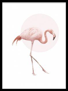 Flamingo, poster. Poster med flamingo. Poster med en grann rosa flamingo och en ljusrosa cirkel på vit bakgrund. En stil som passar både modern och mer retro inredning. Matcha med våra andra posters med djurmotiv, som uggla och ren.