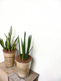 Mindscape planters