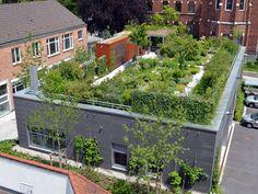 Artenreicher Dachgarten ist FBB-Gründach des Jahres 2015 The roof garden with many species is the FB Cool Plants, Green Plants, Cluster House, Tower Apartment, Benefits Of Gardening, Hydrangea Care, Types Of Fish, Urban Farming, Urban Gardening