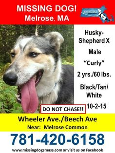 Missing Dogs Massachusetts October 3 · Edited ·    11-18-15 Curley is still missing and there have been no confirmed sightings out him. Please continue to share!   10-7-15 There was a possible sighting of Curly  on Monday 10/5, on Penney Road in Melrose. His red leash was still attached. Please continue to share and call the number on the flyer with any additional sightings. ... See More