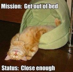 Mission...get out if bed.