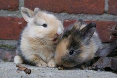 Gato trata coelhos como se fossem seus filhotes - Linkanimal