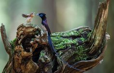 21 beeldschone foto's van vogels die zich over hun jonkies ontfermen