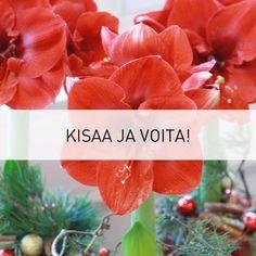 ★ Fiery Red ★ Joulukukkakisa jatkuu vielä hetken. Valitse suosikkisi kuudesta vaihtoehdosta ja voit voittaa 50 euron arvoisen kukkalahjakortin! Kisa löytyy täältä: http://www.kauniistikotimainen.fi/ https://www.facebook.com/sonjaperho/posts/10203414872918016?pnref=story