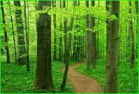 Ecology MCQ Part 3 | BioinformaticianNRJ