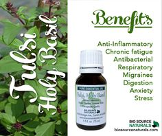 Emotionally, Basil, Sweet essential oil is calming, reducing stress and promoting deep sleep. #aromatherapy