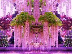Download free HD Wallpapers Beautiful flowers