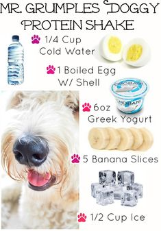 Healthy Doggy Protein Shake - Chilling Treat for Dogs to Eat