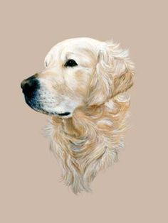 Isabel Clark Pet Portraits - Dog Paintings from Your Own Photos - Golden Retriever Barney