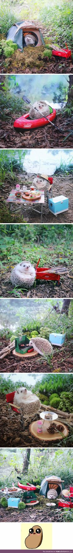 This camping hedgehog is the cutest thing you see today