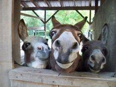 Donkeys, Donkeys, Donkeys!!