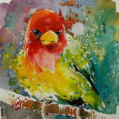 Red Headed Barbet 2• watercolor painting • 6x6=66 series • 15 x15 cm • original painting by tilentiart on Etsy