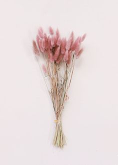 Flowers Discover Dried Bunny Tail Grass in Mauve Pink The perfect addition to your dried flower centerpieces and bouquets beautiful pinkbunny tails give your floral designs soft texture and color. Mauve Pink Tall Long x Wide Blooms Stems Dried Flower Centerpieces, Flower Arrangements, Wedding Centerpieces, Mauve, Murs Roses, Posters Vintage, Bunny Tail, Flower Aesthetic, Aesthetic Drawing