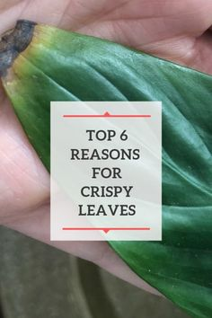 Are Your Plant Leaves Turning Brown and Crispy?