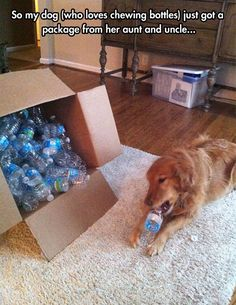 So my dog just got a package...