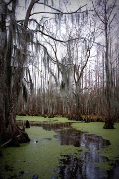 You have to be careful in the swamp.The water is dark and murky and you can never be completely sure what lurks under there ready to rise up and pull you down. --where Julien was attacked.