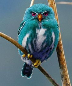 Have You Ever Seen This Color of Owl Beautiful
