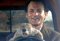 Bill Murray with Punxsutawney Phil driving in the 1993 film Groundhog Day