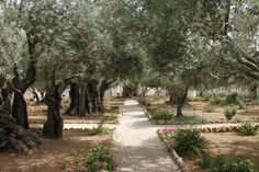Garden of Gethsemane Outside the ancient city of Jerusalem where Jesus prayed before being arrested and betrayed by Judas.