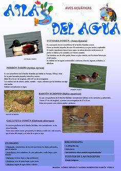 Aves Acuáticas II Autoras: Marina Gómez y Sandra Domínguez 2º F