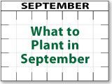What to Plant in September!! (this site also covers what to plant every other…